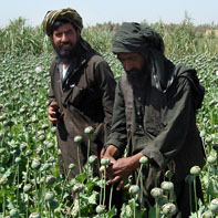 Opium poppy growers